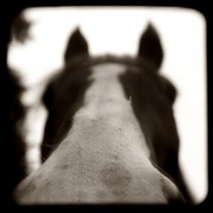 horse-angle
