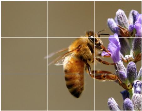 rule_of_thirds_bee